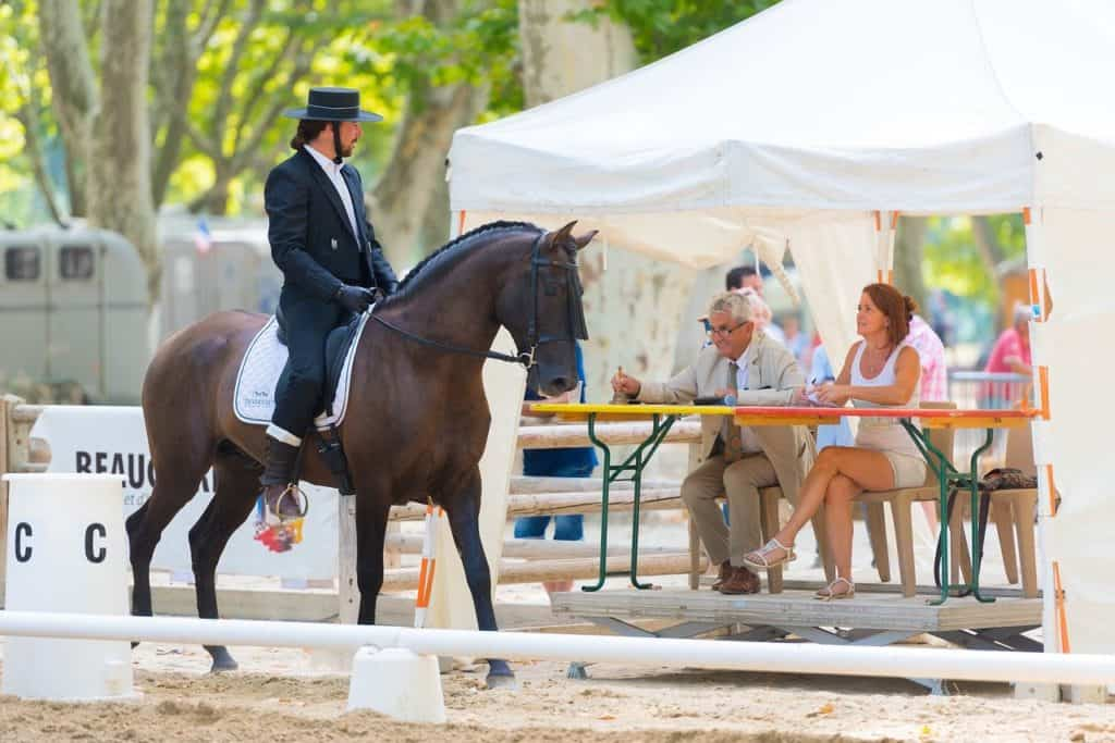 What is dressage